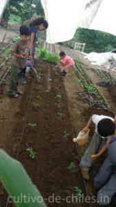 huerto de hortalizas o urbano